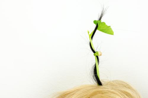 髪 伸ばしたい 梳く